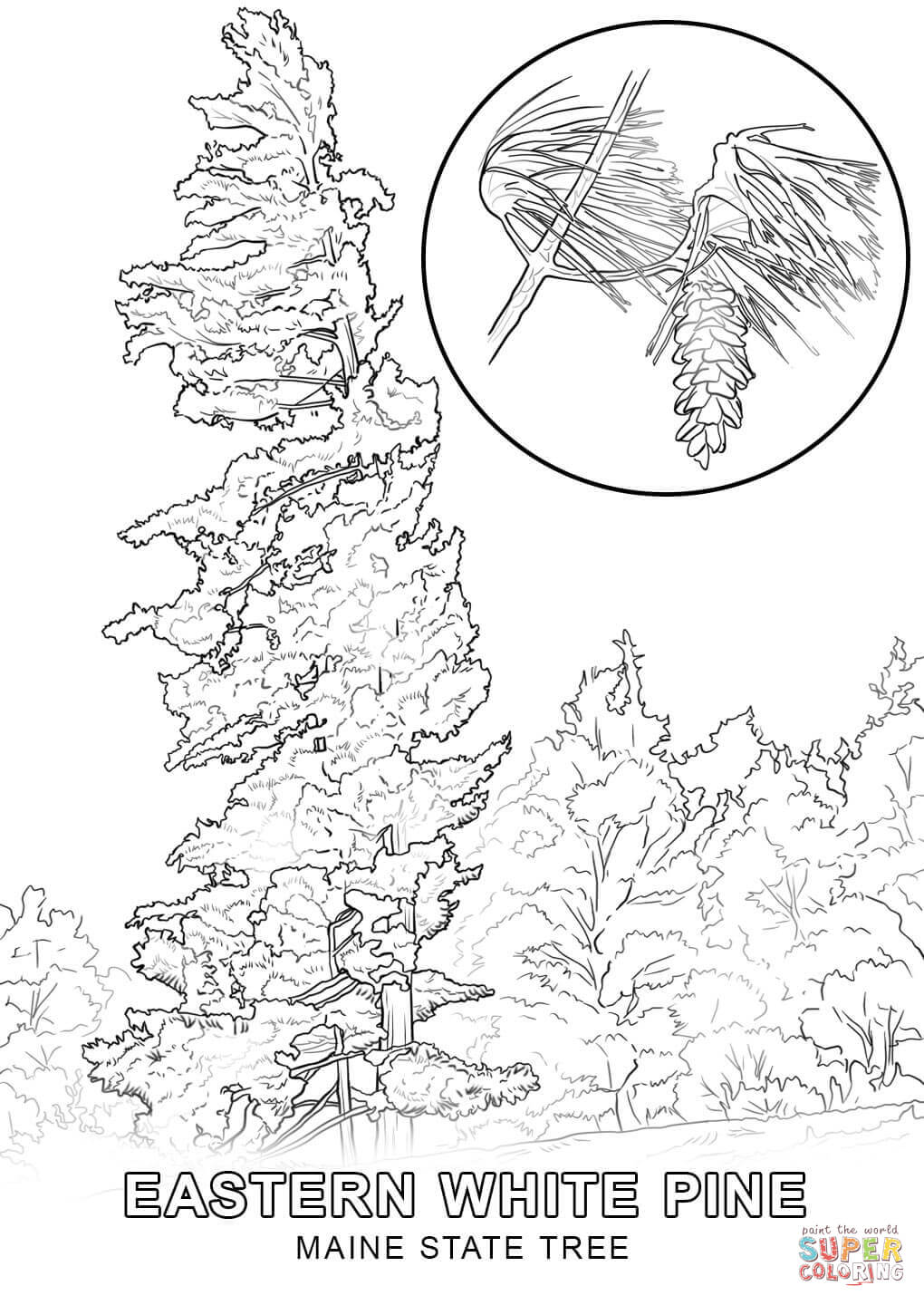 Maine coloring #20, Download drawings