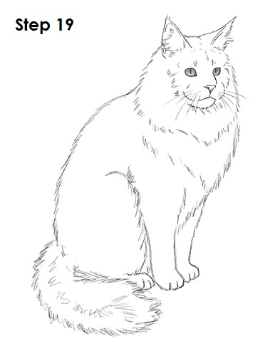 Maine Coon clipart #4, Download drawings