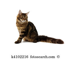 Maine Coon clipart #14, Download drawings