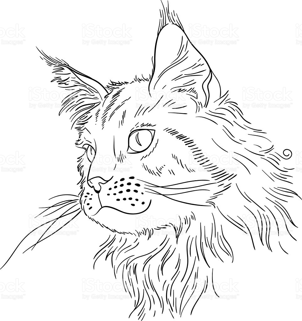 Maine Coon clipart #7, Download drawings