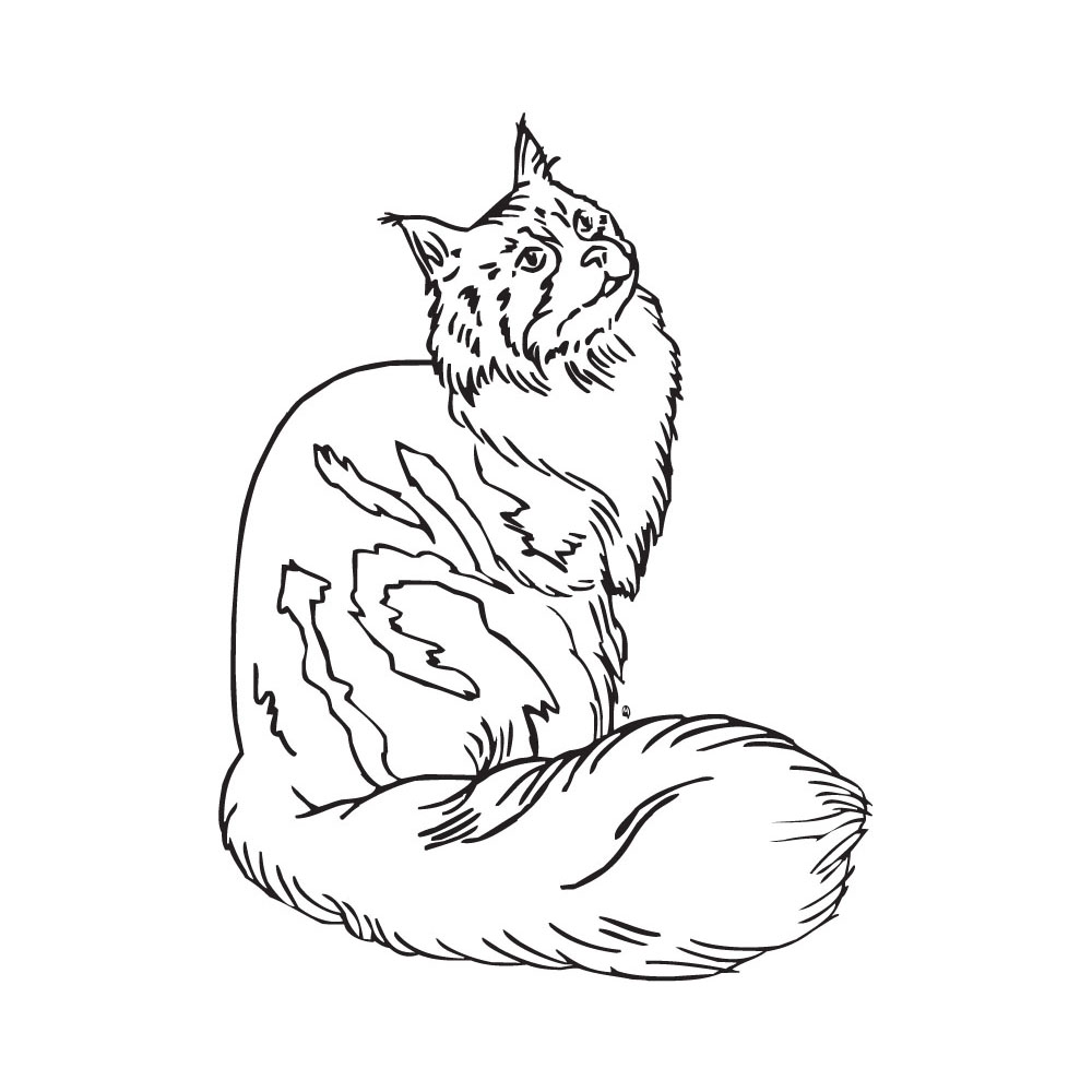 Maine Coon clipart #1, Download drawings