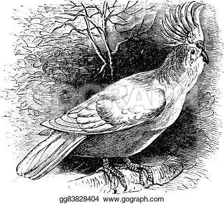 Major Mitchell's Cockatoo clipart #16, Download drawings