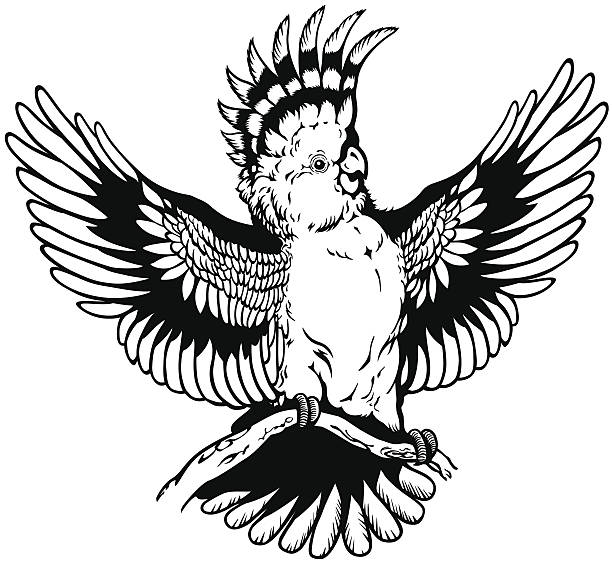 Major Mitchell's Cockatoo clipart #17, Download drawings