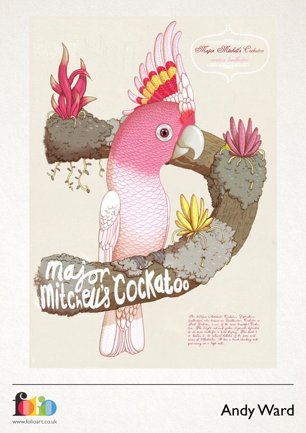 Major Mitchell's Cockatoo svg #5, Download drawings