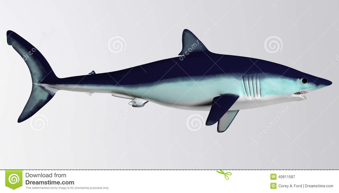 Mako Shark clipart #15, Download drawings