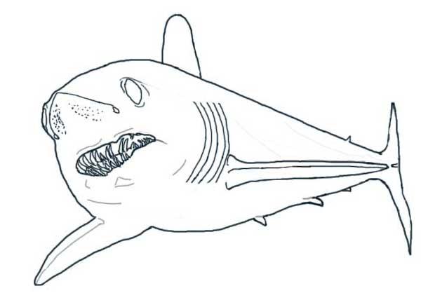mako shark coloring pages - photo#6