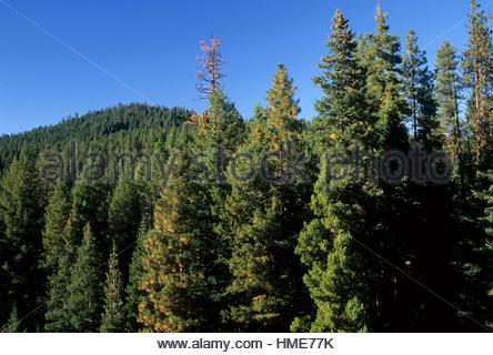 Malheur National Forest clipart #9, Download drawings
