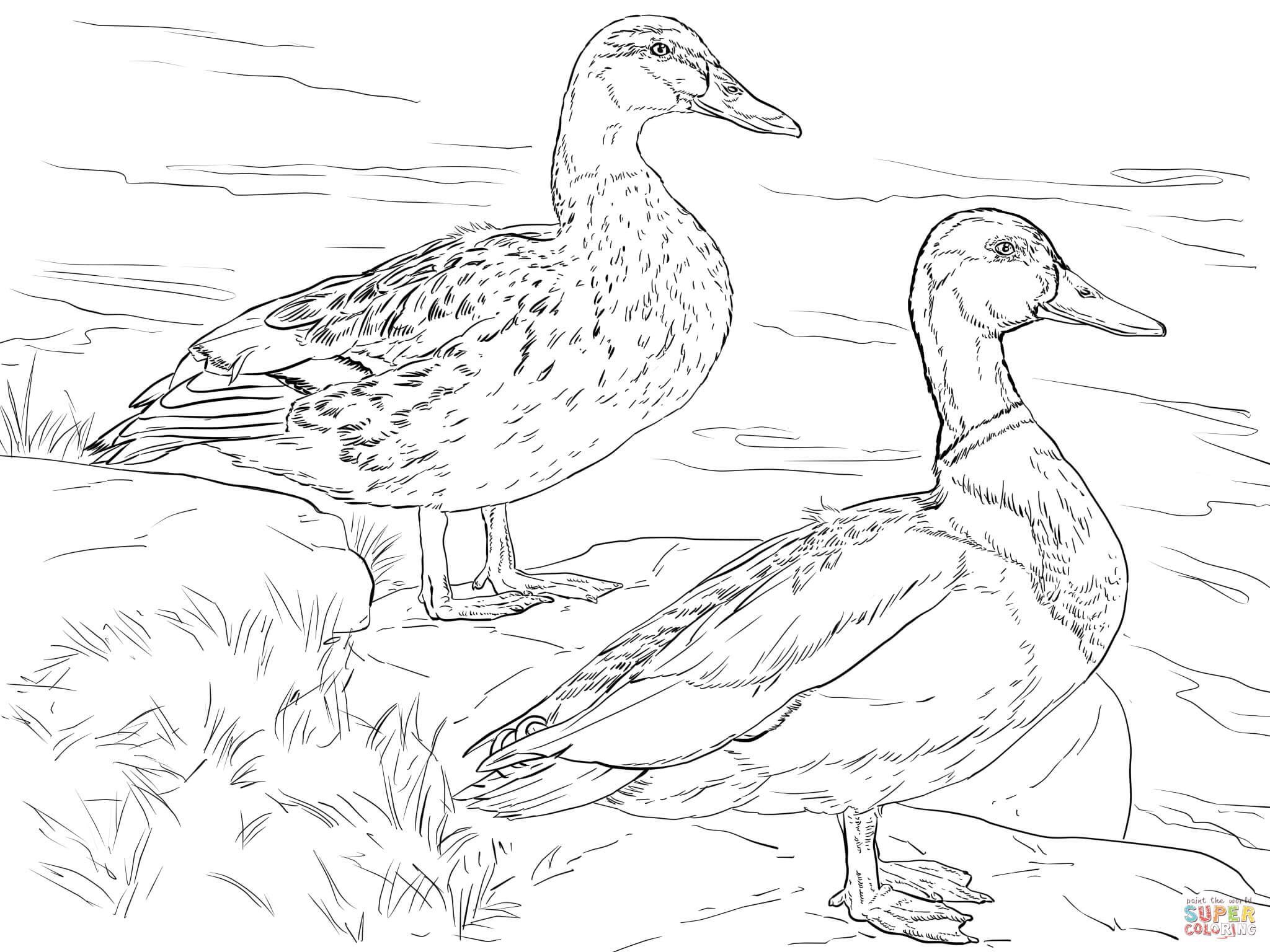 Wood Duck coloring #18, Download drawings