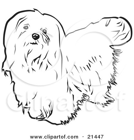 Maltese clipart #11, Download drawings