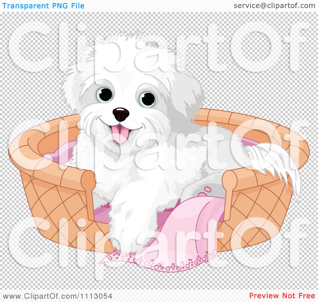 Maltese clipart #6, Download drawings