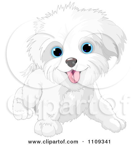 Maltese clipart #2, Download drawings