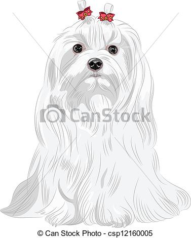 Maltese clipart #5, Download drawings