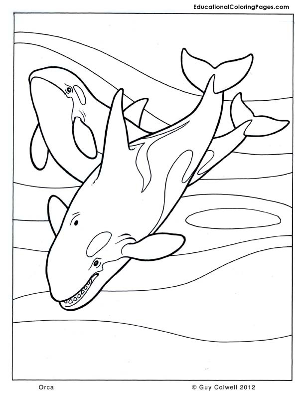 Orca coloring #7, Download drawings