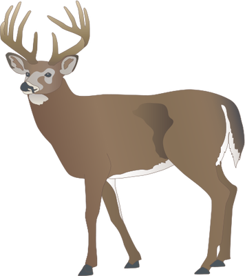 White-tailed Deer svg #20, Download drawings