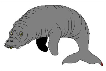 Manatee clipart #17, Download drawings