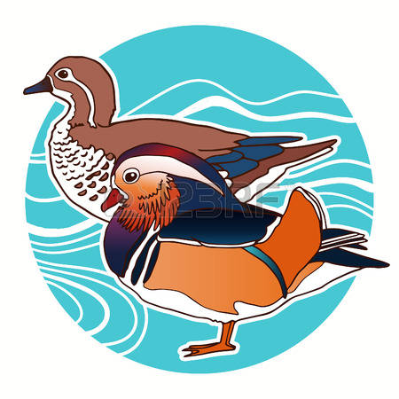 Mandarin Duck clipart #7, Download drawings