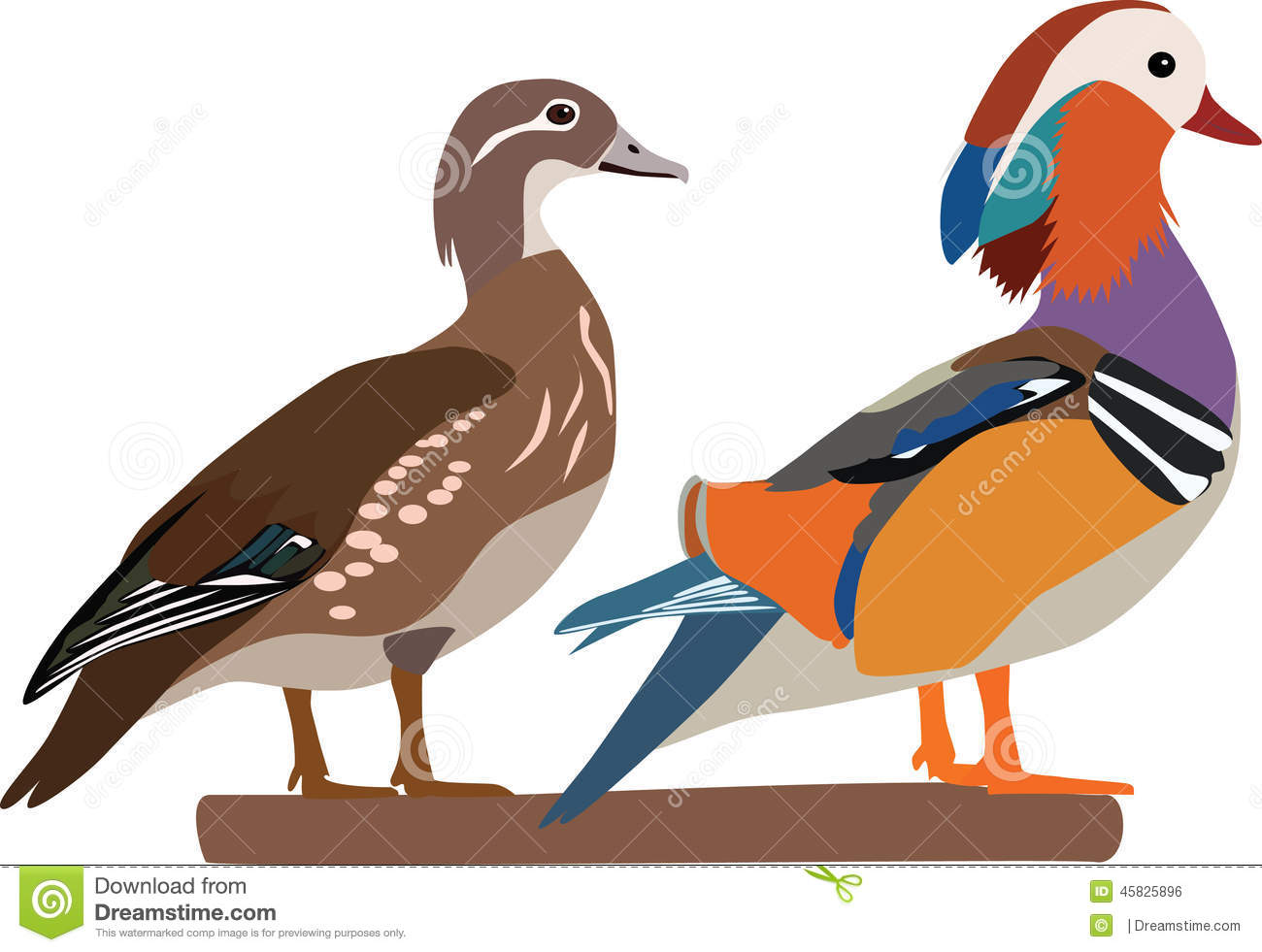 Mandarin Duck clipart #18, Download drawings