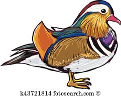 Mandarin Duck clipart #15, Download drawings