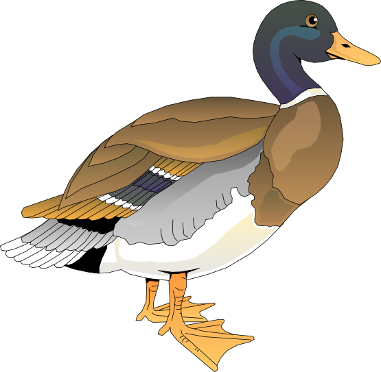 Mandarin Duck clipart #14, Download drawings