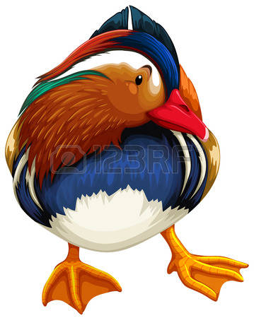 Mandarin Duck clipart #11, Download drawings