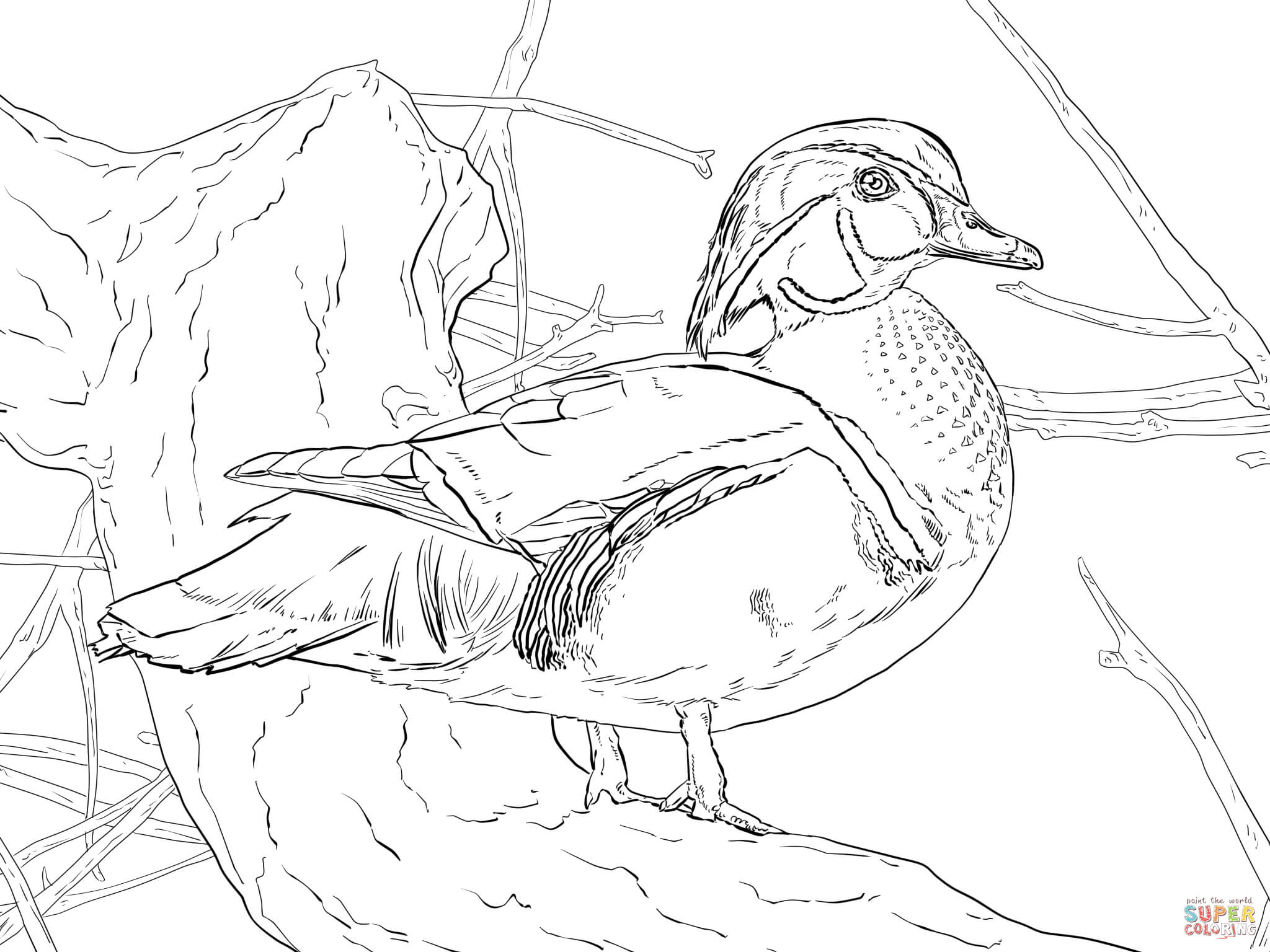 Wood Duck coloring #11, Download drawings