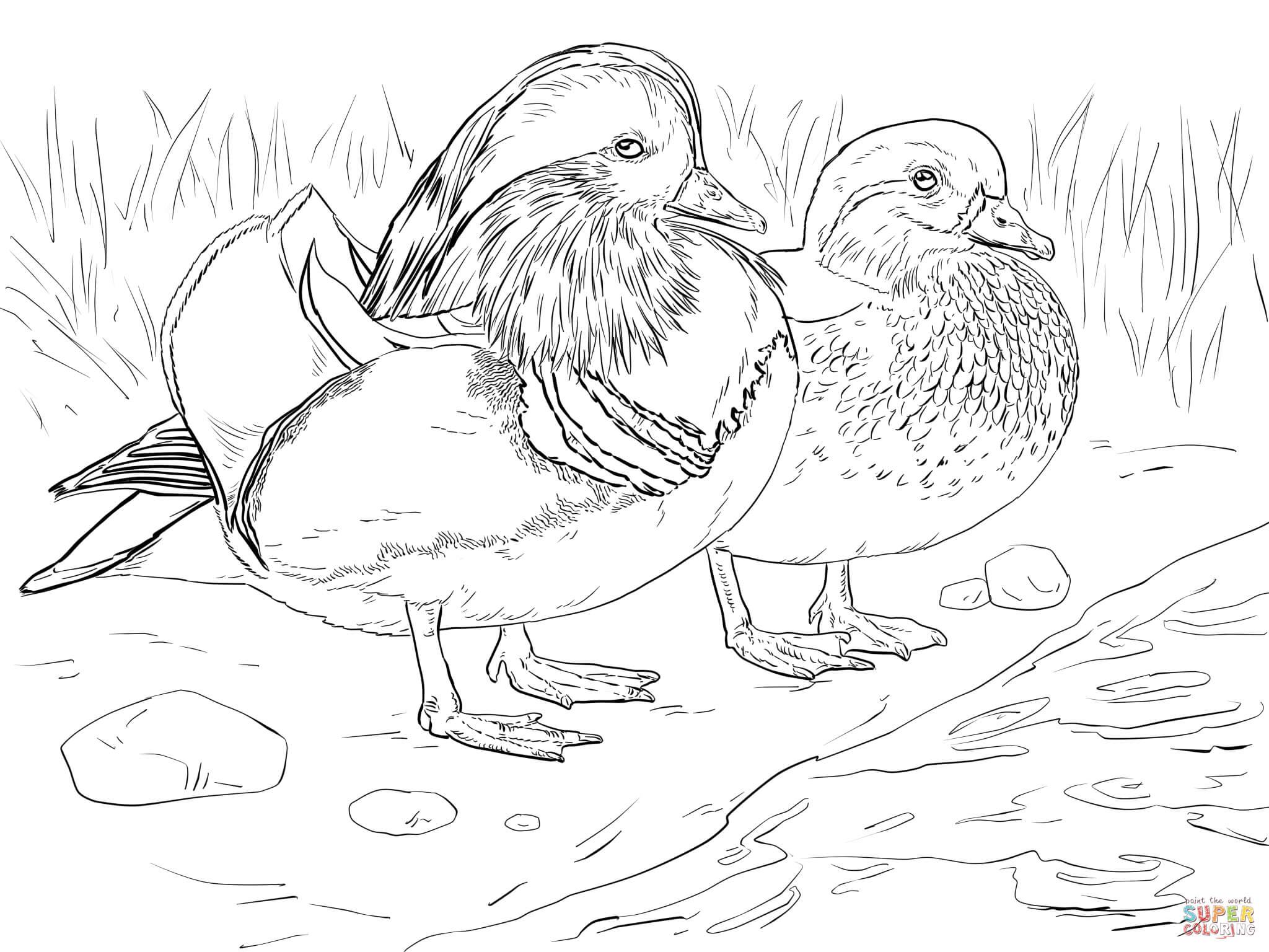 Wood Duck coloring #17, Download drawings