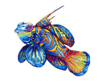 Mandarinfish clipart #20, Download drawings