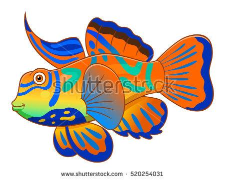 Mandarinfish clipart #10, Download drawings