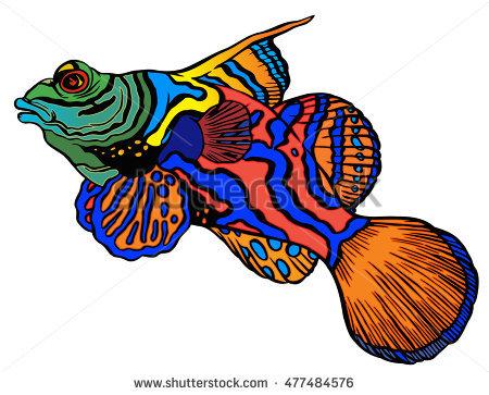 Mandarinfish clipart #9, Download drawings