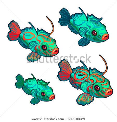 Mandarinfish clipart #4, Download drawings