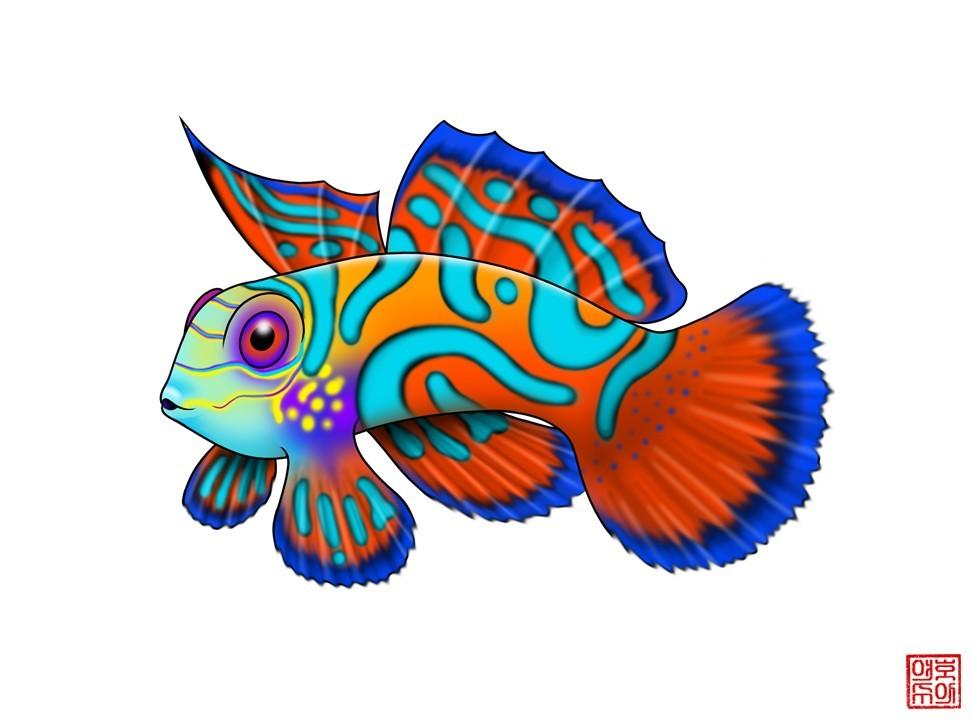 Mandarinfish clipart #18, Download drawings
