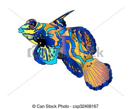 Mandarinfish clipart #16, Download drawings