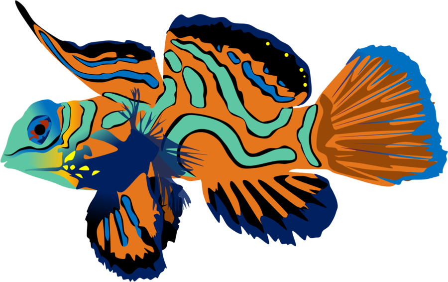 Mandarinfish clipart #7, Download drawings