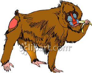 Mandrill clipart #13, Download drawings