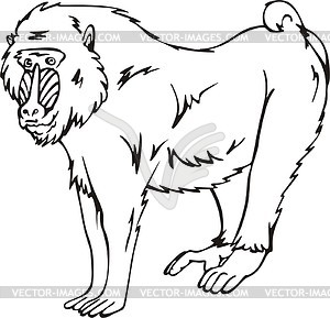 Mandrill clipart #1, Download drawings