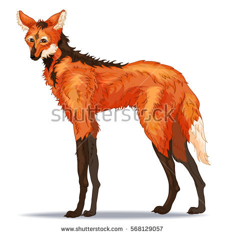 Maned Wolf clipart #11, Download drawings