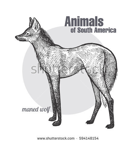 Maned Wolf clipart #7, Download drawings