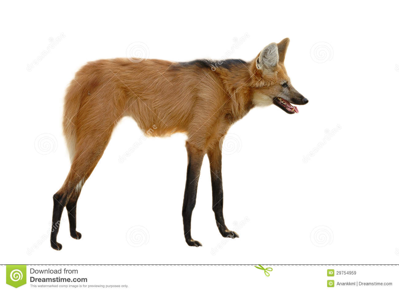 Maned Wolf clipart #19, Download drawings