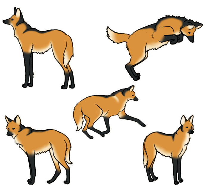 Maned Wolf clipart #10, Download drawings