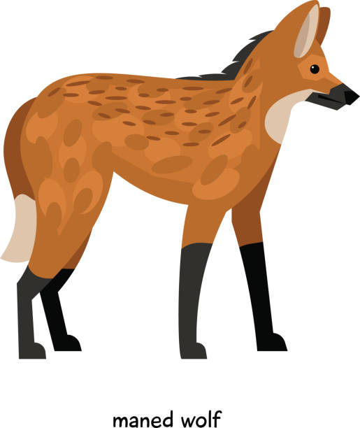 Maned Wolf clipart #15, Download drawings