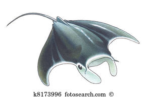 Manta Ray clipart #10, Download drawings