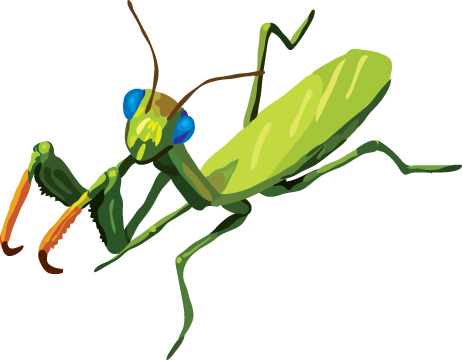 Praying Mantis clipart #10, Download drawings