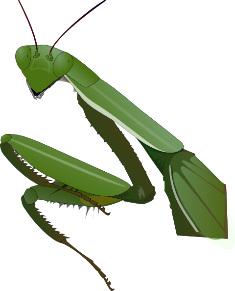 Praying Mantis clipart #13, Download drawings