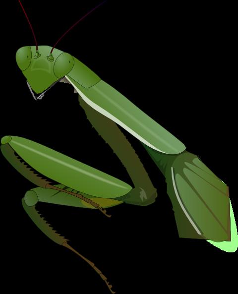 Praying Mantis clipart #8, Download drawings