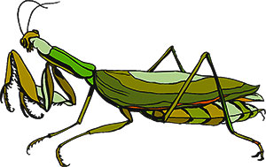 Praying Mantis clipart #5, Download drawings