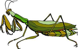 Praying Mantis clipart #16, Download drawings