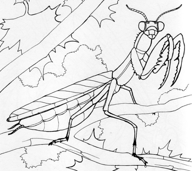 Praying Mantis coloring #12, Download drawings