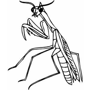 Praying Mantis coloring #6, Download drawings