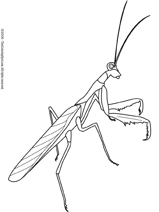 Praying Mantis coloring #10, Download drawings