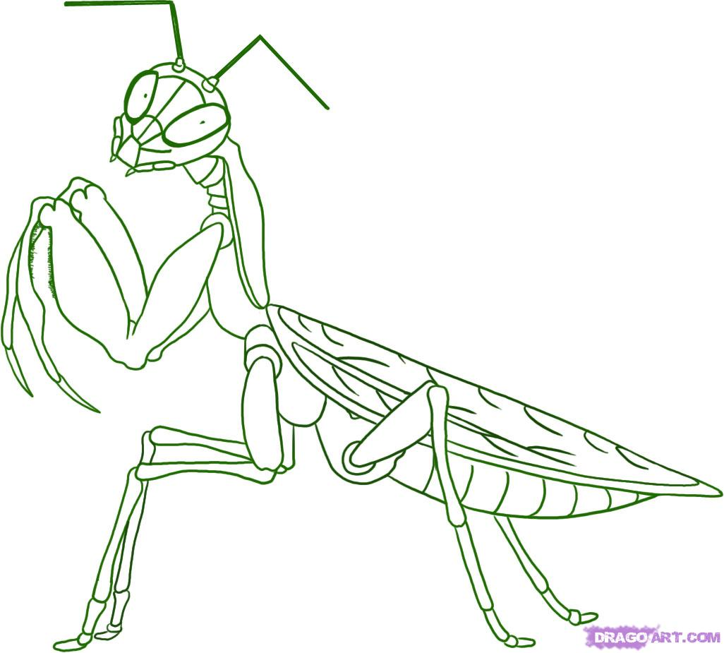 Praying Mantis coloring #9, Download drawings